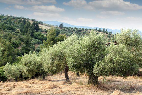 Kickstarting 'Terra Kytheria' on Kythera island, Greece
